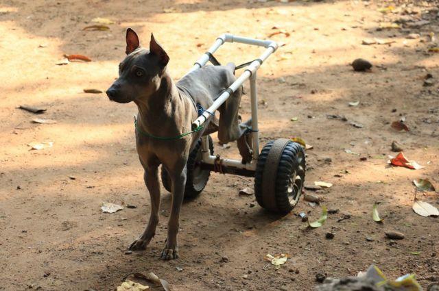 پہیے کے ساتھ کتا