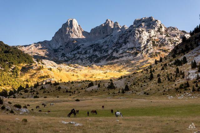 bosanski brdski konji na prenju u dolini tisovice