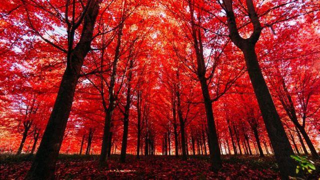 Bosque no outono