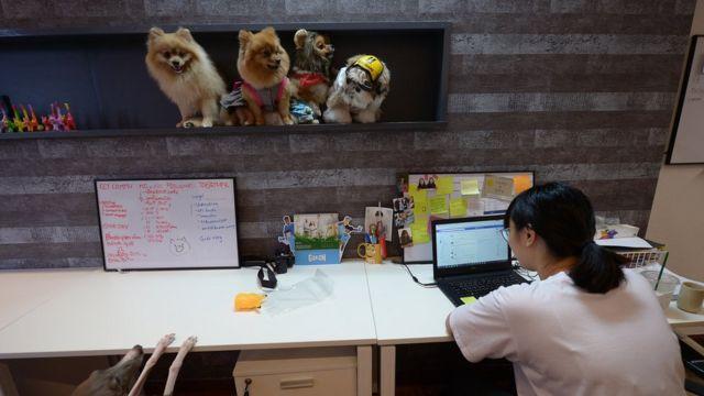 สุนัขพันธุ์ปอมปอม ชิสุ 4 ตัว นั่งอยู่บนชั้นพักภายในสำนักงาน