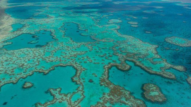 グレートバリアリーフはオーストラリアの観光名所でもあり、サンゴの白化は大きな懸念だ