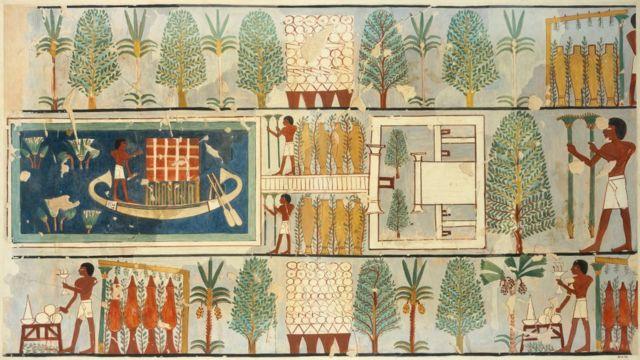 رسوم مصرية قديمة لمجموعة من الزراعات المصرية