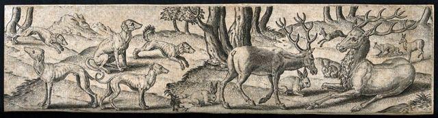 Los animales conocidos... (Imagen: Wellcome Collection)