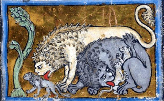 Leones reviviendo a sus crías.