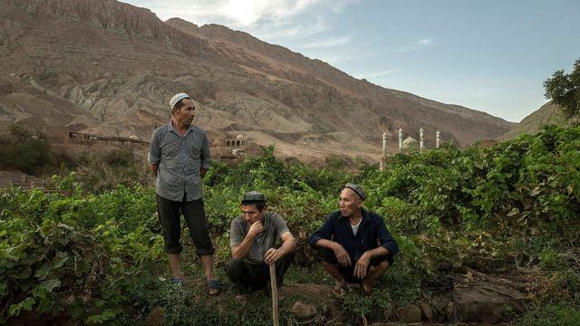 Uigures en el campo