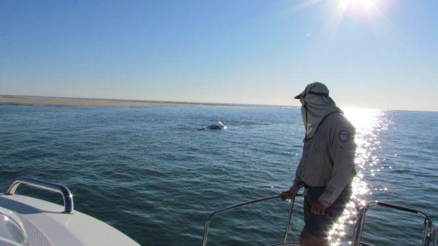 QPWS kurtarma ekibi ve balinalar