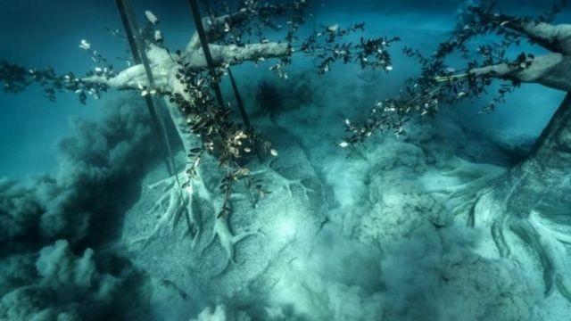 تصاویر شگفتانگیز جنگل زیر آب