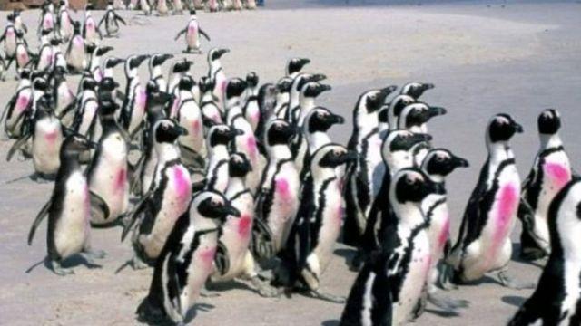 سرب من طيور البطريق