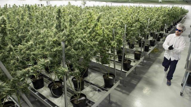 大麻の販売方法や使用可能地域は、州によって異なる