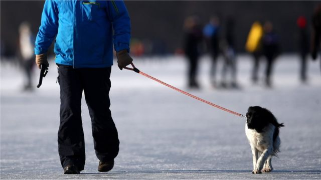 راه بردن سگ در روی یخ