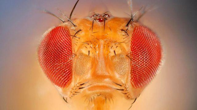 У плодовых мушек (Drosophila melanogaster) тоже есть своего рода мысленный взгляд