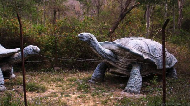 http://www.bbc.com/earth/story/20150519-the-truth-about-giant-tortoises