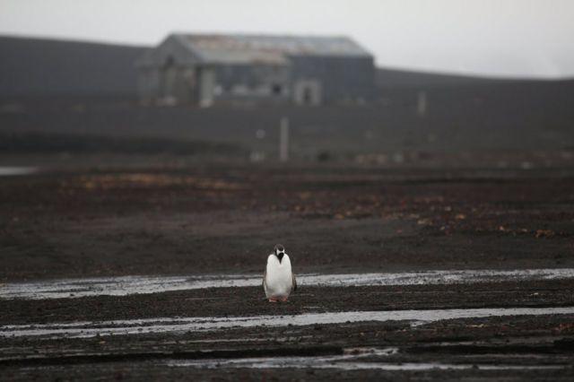yalnız bir penguen