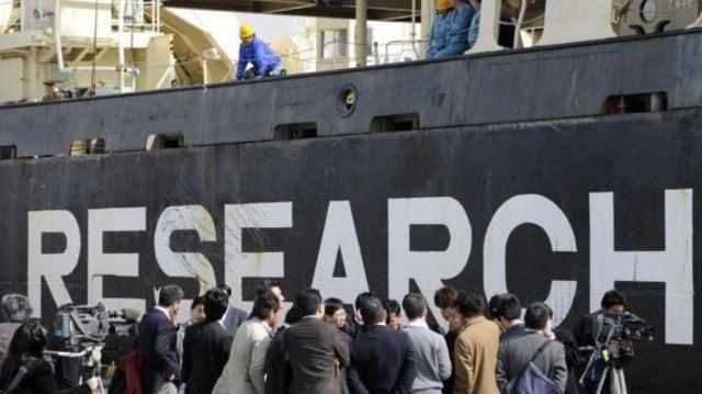 Japonya bilimsel amaçlı balina avcılığının serbest olması gerektiğini söylüyor.