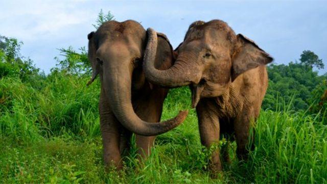 Dos elefantes tocándose con la trompa