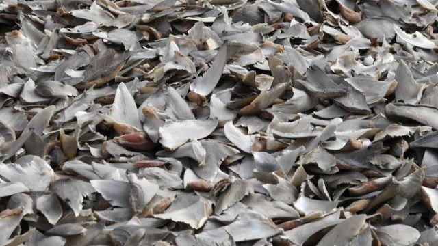 Haifischflossen in Dakar, Senegal