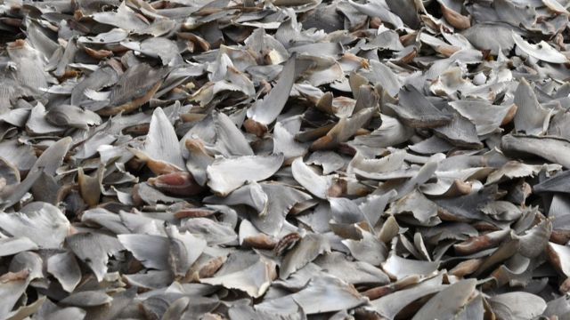 Aletas de tiburón en Dakar, Senegal
