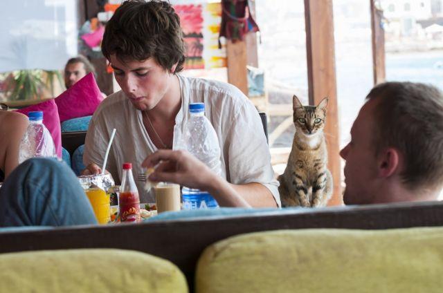 mačka u restoranu