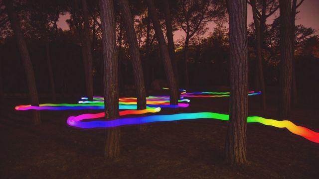 Bosque con haz de luz serpenteando