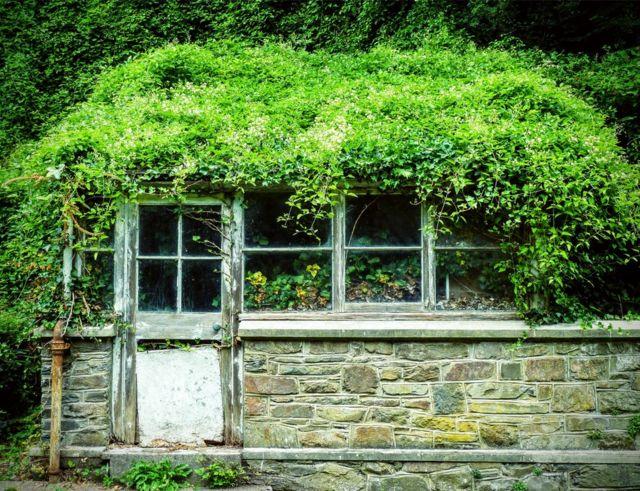Caseta con plantas creciendo sobre ella.