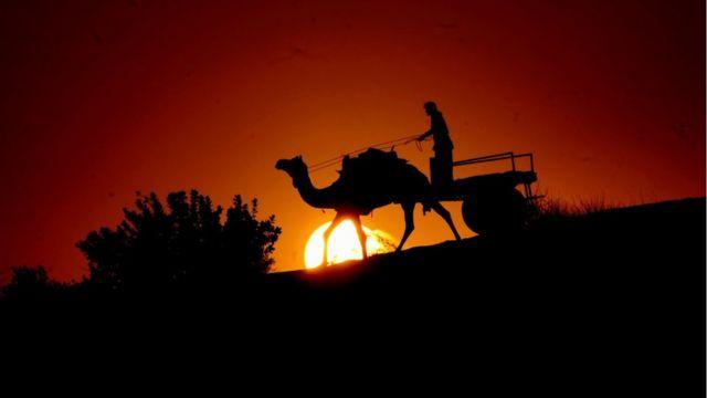 Carreta de camello