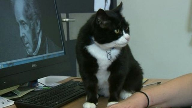 Palmerston the cat with her namesake, Lord Palmerston on the computer next to her