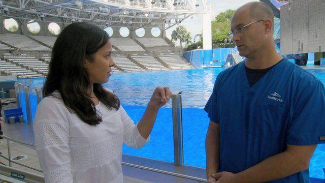 Liz speaks to Dr Chris Dold at SeaWorld