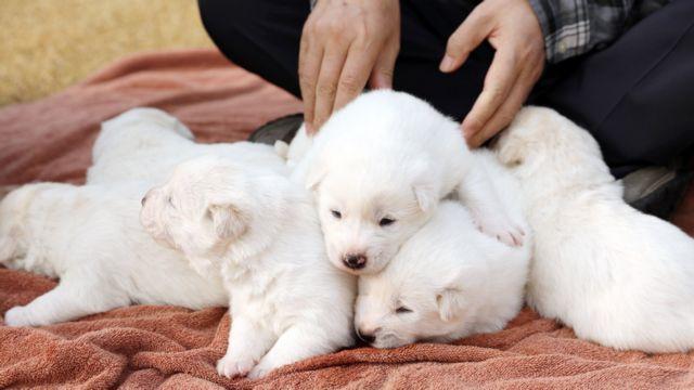 psi koji su poslati Kim Džong-Unu