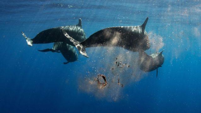 Fezes de baleias