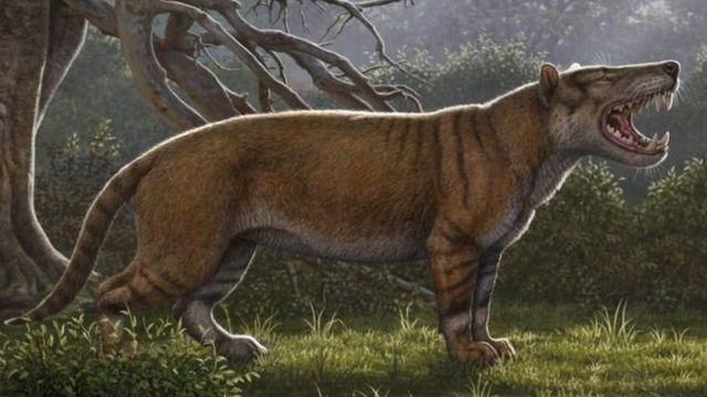 """""""Hynaenodon"""" türü aslan"""