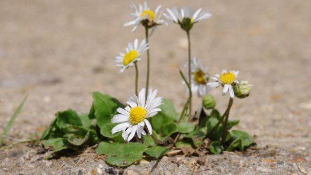 una flor en la ranura del pavimento