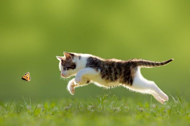 mačka na travi
