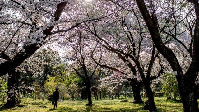 Un bosque japonés