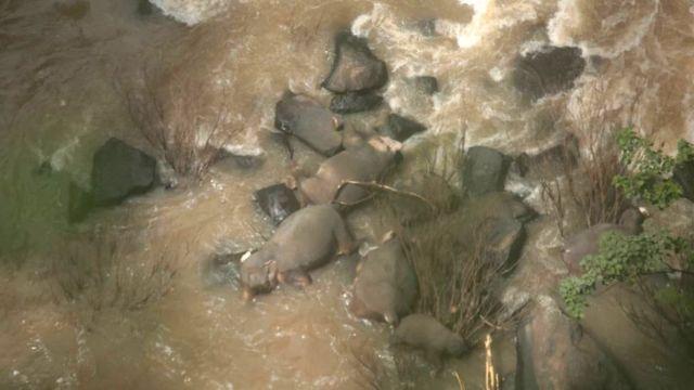 Погибшие слоны