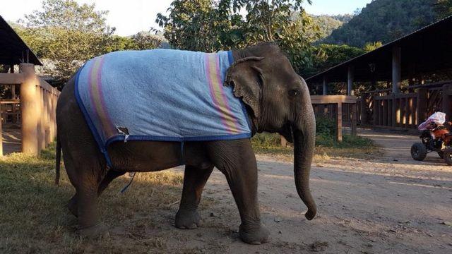 An elephant is wearing a towel