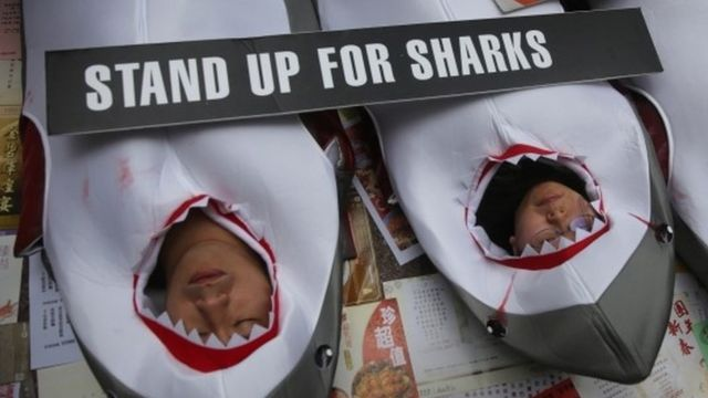 Hong Kong airline Cathay Pacific announces shark fin ban