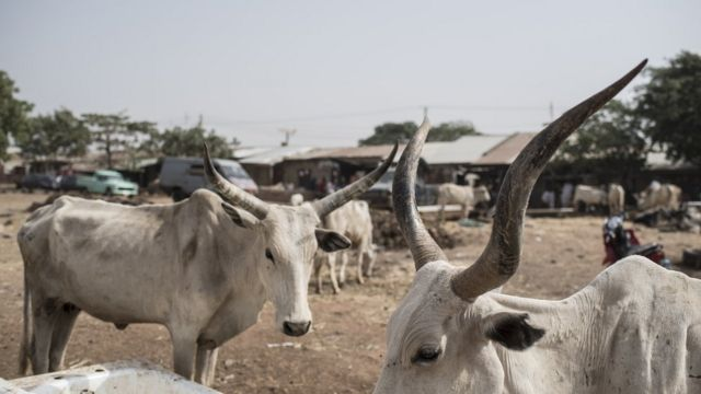 Benue grazing law