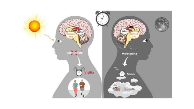 Gráfico explica ação da melatonina
