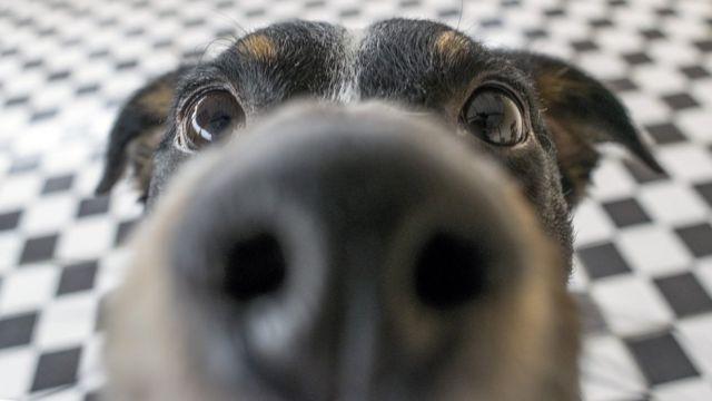 Primer plano de la nariz de un perro.