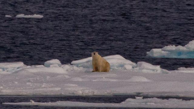 Polar bear on thin ice (c) NOAA