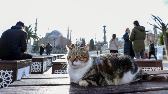 İstanbul'da kediler