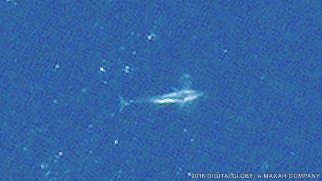 نهنگ تیغباله