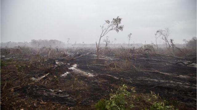 Deforestación en Hopelchén