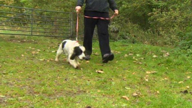 Geraint Davies walking in the fields