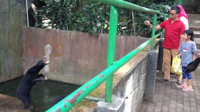 Pengunjung terlihat masih memberi makan pada beruang madu di Kebun Binatang Bandung meski pihak kebun binatang mengaku sudah melarangnya.