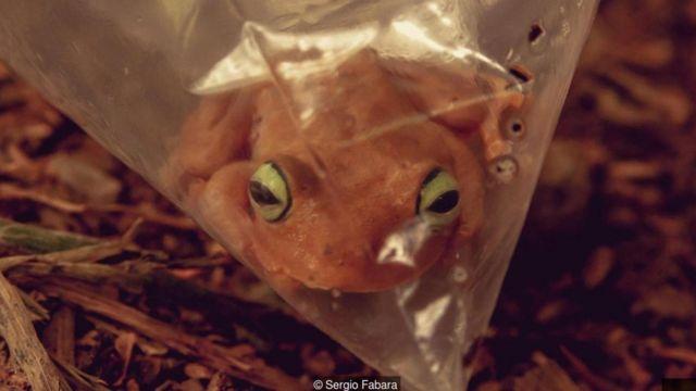 Una rana en una bolsa
