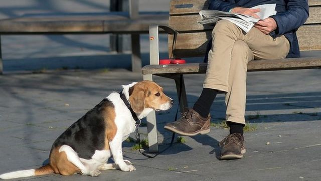 Dog and owner in a Spanish park, file pic