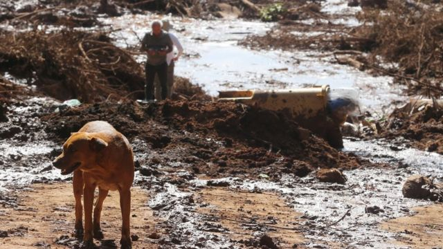 Cachorro e pessoas em meio a lama causada por rompimento de barragem em Brumadinho
