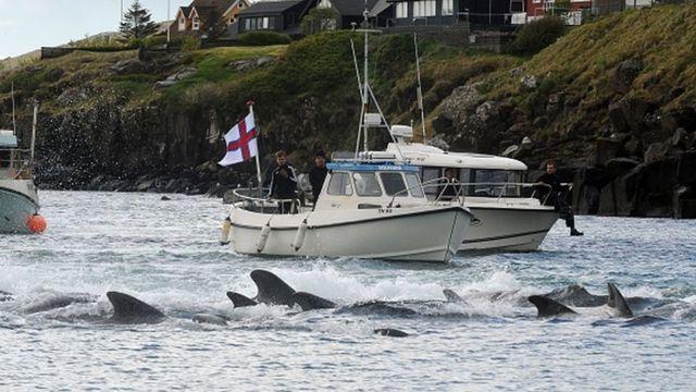 Лодка и дельфины