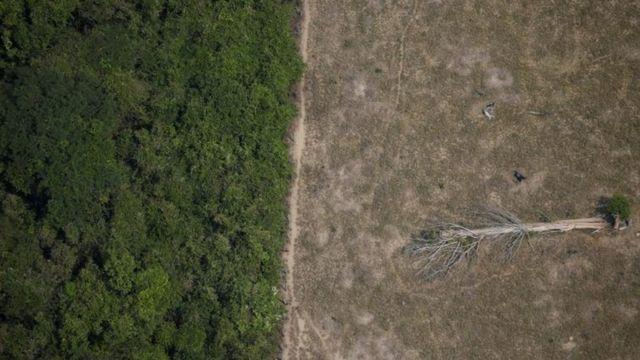 Árvore caída em área desmatada na Amazônia